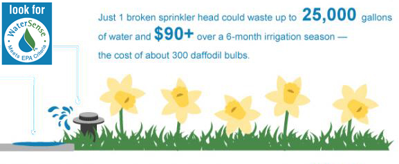 summer-infographic-daff