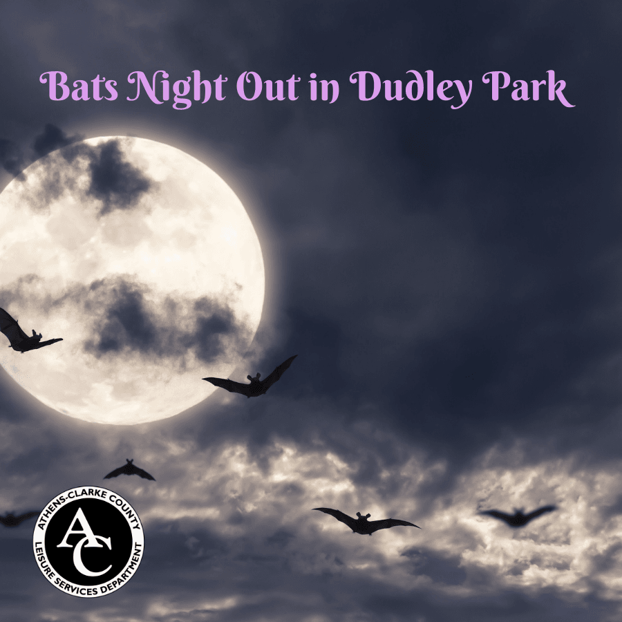 Bats Night Out 3 X 3